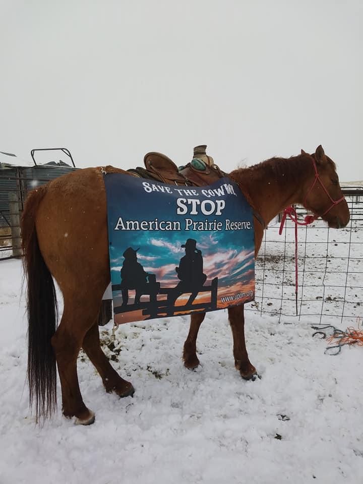 horse stop apr
